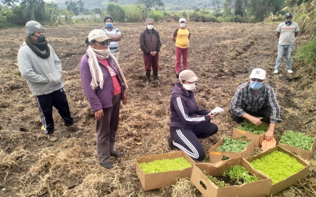 projet-alimentaire-durable-Equateur